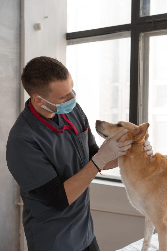 Medicina Veterinaria El Putxet